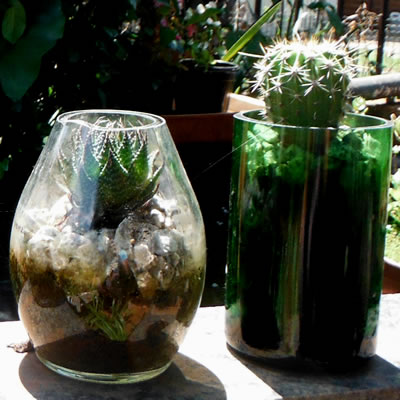 recycle wine bottle planter